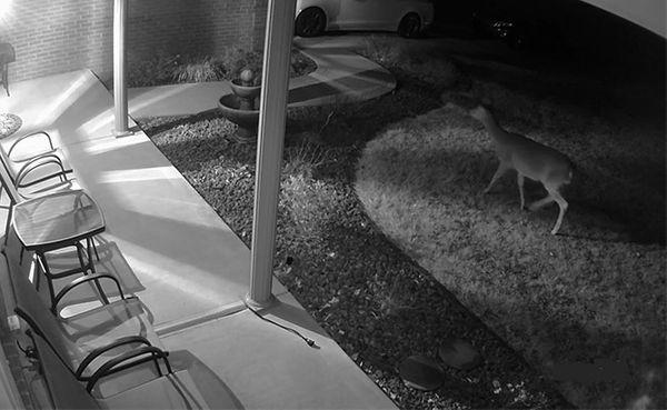 Sử dụng điện thoại để phát hiện camera quay lén siêu nhỏ trong nhà nghỉ